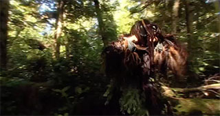 A potlatch dancer moves through the forest, his face and body covered by dance costume.